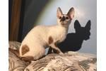 Фото котят